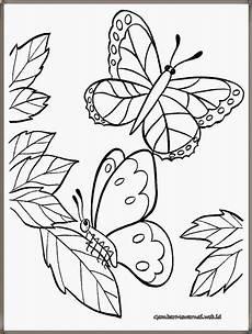 Mewarnai Gambar Bunga Dan Kupu Kupu Warna Key