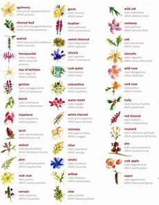38 fiori di bach percorso di conoscenza di s 233 attraverso i fiori di bach