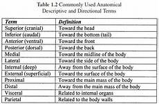 anatomical terms of location quiz regions and cavities medical terminology help