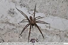 wie 252 berwintern heimische spinnen wie die kreuzspinne