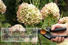 wie schneidet hortensien wann sollte hortensien schneiden nach der bl 252 te und