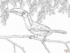 realistic keel billed toucan coloring page free