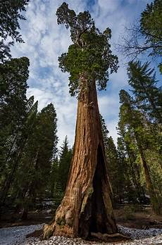 eqoi7a things to do in sequoia national park travel caffeine