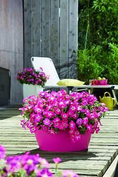 blumen pflanzen fur den balkon my flowers
