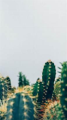 aesthetic cactus iphone wallpaper cactus wallpapers wallpaper cave