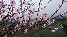 Photo Gratuite Tenerife Printemps Arbre Fleur Image