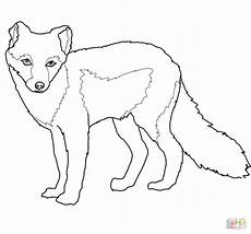 Arctic Fox Coloring Sheet Arctic Fox Summer Coat Coloring Page Free Printable