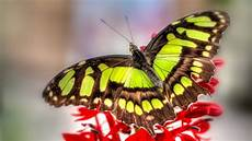 Colorful Butterfly Wallpaper colorful butterfly hd wallpapers real artistic