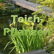 Pflanzen Am Teich Teichpflanzen Richtig Einpflanzen Teichfilter