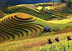 terraced farms mu cang chai vietnam great panorama picture