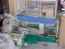 coniglio nano gabbia gabbia conigli nani conigli nani