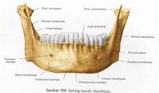 Lalu Mohammad Salim Rahmatullah Gambar Anatomi