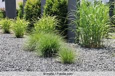 Kiesbeet Pflanzen Gestalten - kiesbeet selbst anlegen anleitung und pflanz tipps