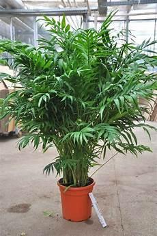 Pflanzen Für Dunkle Ecken In Der Wohnung - 131 besten zimmerpflanzen bilder auf