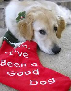s stories merry christmas dog friends