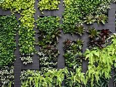 To Plant Vertical Garden by How To Build A Vertical Garden At Home Realestate Au