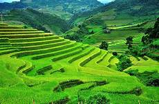 terraced farms mu cang chai great panorama picture