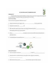 10 4 worksheet 10 4 cell differentiation powerpoint notes think about it the human