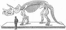 malvorlage dino skelett batavusprorace