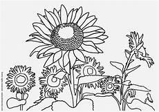 malvorlagen sonnenblume malen