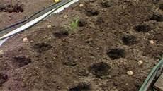 kartoffeln auss 228 en und anbauen