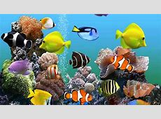 25  Aquarium Backgrounds, Wallpapers, Images, Pictures