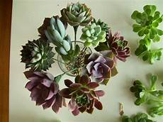 diy wedding bouquet diy succulent bouquet wedding secret stuff diy wedding bouquet