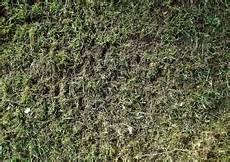 Rasenpflege 8 Vertikutieren Moos Ausharken Im M 228 Rz