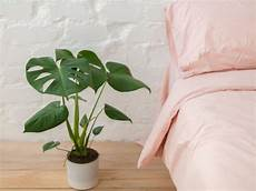indoor plants for low light hgtv