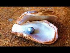 how do oysters make pearls youtube