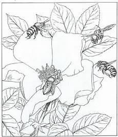 pin by mami on coloring pages coloring pages nature bee