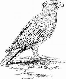 realistic coloring pages only coloring pages