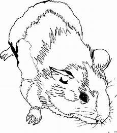 Malvorlagen Kostenlos Tiere Katzen Meerschweinchen Ausmalbilder Ausmalbilder