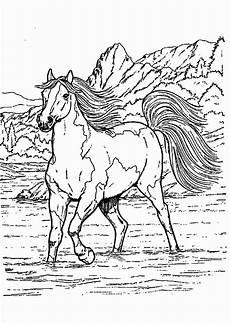 Ausmalbilder Pferde Western Malvorlage Pferd Mit Reiter Malvorlagen
