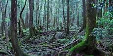 Aokigahara Hutan Favorit Untuk Bunuh Diri Di Jepang