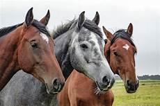 4 Foto Kuda Paling Indah Di Dunia Kembang Pete