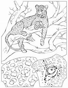 leopard coloring page animals town free leopard color
