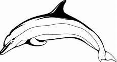 delphin im sprung ausmalbild malvorlage tiere