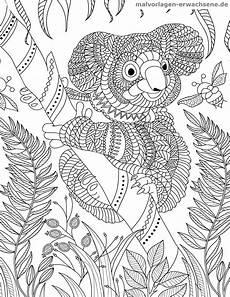 malvorlage koala f 252 r erwachsene kostenlose ausmalbilder