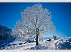 Winter HD Wallpaper   Background Image   1920x1280   ID