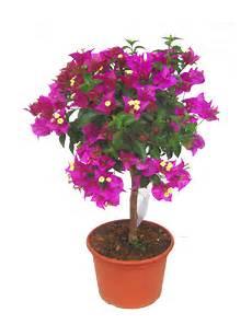 balkonpflanzen für pralle sonne balkonpflanzen sommerblumen balkonpflanzen kaufen