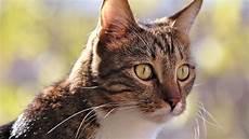 Eingew 246 Hnung Einer Neuen Katze Freigang