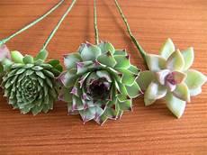 diy succulent bouquet succulent wedding bouquets arrangements garden pinterest
