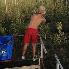 cortile di carpi azienda agricola monticelli cortile di carpi home