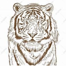 20 Ide Lukisan Pensil Kepala Harimau Pantherrka