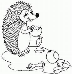 Igel Malvorlagen Gratis Igel Isst Aepfel Ausmalbild Malvorlage Tiere