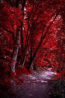 Through The Bloodred Forest By Aenea Jones My Feelings