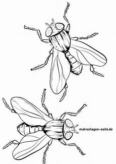 malvorlage fliege insekten kostenlose ausmalbilder