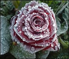frozen foto bild pflanzen pilze flechten