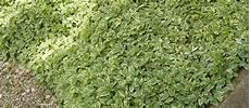 plantes vivaces pour talus plantes couvre sol pour talus table basse relevable